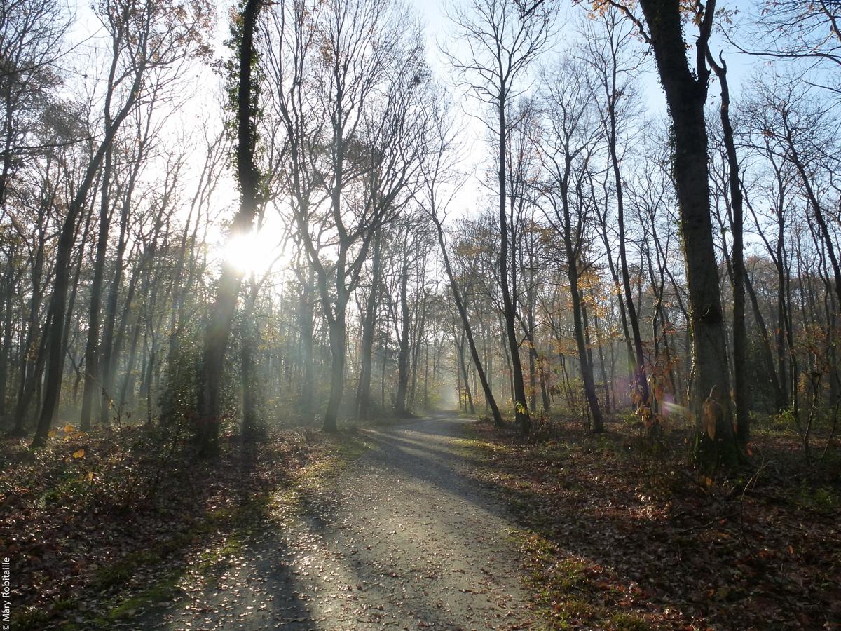 Images de la semaine : Soleil d'hiver