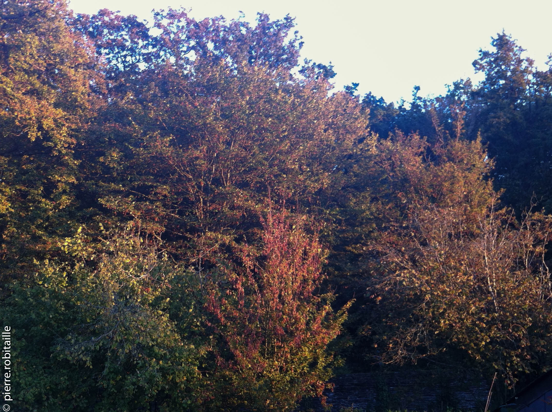 L'automne arrive !