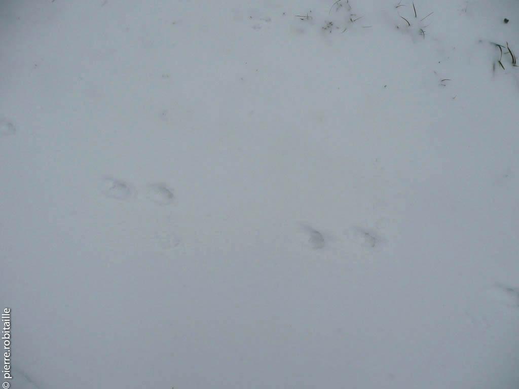 images de fond : neige 3